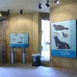 Strömungszylinder im Grotteninneren