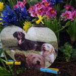 Ein Herzbild von unseren Hunden