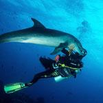 Bottlenose dolphin (Tursiops), Tiputa Pass, Rangiroa [French Polynesia, 2014]