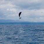 Dolphin, Bahia Drake [Costa Rica, 2009]