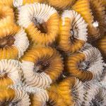 Hard corals, Zamami Island [Japan, 2015]