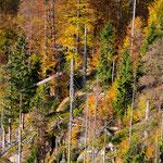 Bunter Herbstwald mit Totholz