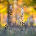 Herbstfarben am Rachelsee
