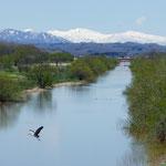篠津運河の春【新篠津村】