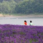 金山湖(南富良野町)