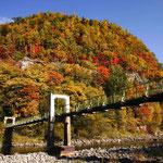 石狩川に架かる吊り橋と紅葉【愛別町】