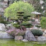 Bonsai im Japangarten von Monaco.