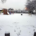 積雪3cmといったところでしょうか?