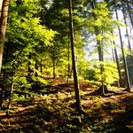 Herbst im Hausruckwald