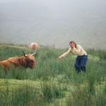 Die erste Begegnung mit einer Hochland-Kuh