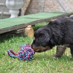 Ein neues Spielzeug :)    10.07.2014