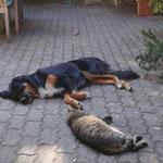 Hund, Katze und wo ist die Maus? Sommer 2015