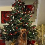 Isny wünscht frohe Weihnachten 2014