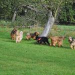 Alle Hunde zusammen <3