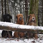 Unsere drei Wäller 26.12.2014