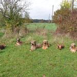 Nappo, Nerja/Ella, Feivel, Isny, Nalani/Nala und Nuchesse/Tinka