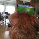 Ocho drückt unseren Kickers die Pfoten :), er ist eben ein Offenbacher Wäller 25.04.2015