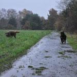 Olina und Feivel im Regen 18.11.204