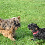 Olina und ihr Halbbruder Nappo :)