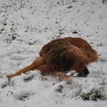 Lecker Schnee 26.12.2014