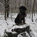 Olinas erster Schnee 26.12.2014