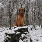 Isny geniest den Schnee 26.12.2014