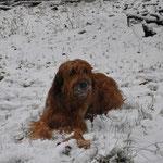 Hat da jemand Schnee genascht? 26.12.2014