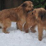 Die werdenden Eltern: Isny (rechts) und Igino (links)