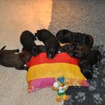 24 Pfoten für Deutschland         21.06.2014