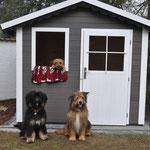 Unsere drei süßen Wuffis in ihrer Hütte :) 21.03.2015