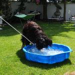 Bei der Hitze brauch man ein Bad 05.06.2015