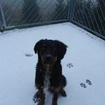 Oreo mit 6 Monaten 13.12.2014
