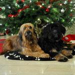 Mama Isny und ihre Tochter Olina wünschen frohe Weihnachten 2014