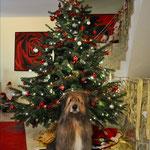 Feivel wünscht frohe Weihnachten 2014