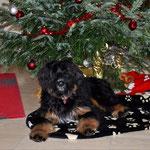 Olinas erstes Weihnachten und sie wünscht euch frohe Festtage 2014