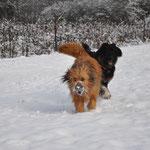 lecker Schnee 01.02.2015
