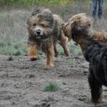 Unsere drei Hunde :)   22.10.2014