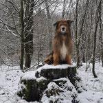Der König der Löwen :) 26.12.2014