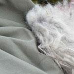 Stilleben: britannisches Langhaar-Schaffell trifft tüchernes Oliv