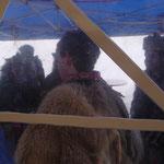 Die stickige Luft im Zelt war nichts für diese Gnomen......