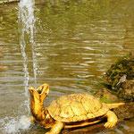 """""""Оранжерейный"""". Вокруг фонтана расположены четыре черепахи. Из их ртов бьют водяные струи."""