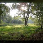 Friedheim-Apeler