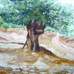 Olivebaum - 2007