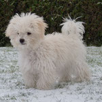 at the age of 5 month - the first snow