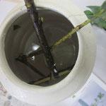 枝がどのように留まっているかを理解するため、瓶の中をのぞいてみました。主枝と副枝が挿してあります。