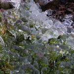 Eisblumen 1
