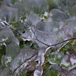Eisblumen 3