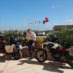 Packen in Sigacik (westlich Izmir)