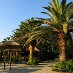 """Palmen auf dem """"Paradiso"""""""