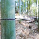 2016年2月11日撮影 平野隆一 「畠山山麓の竹林にて」